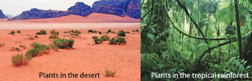 plant&envior